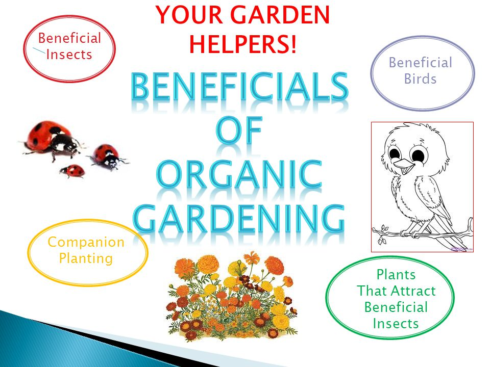 BeneficialS of Organic GardeninG