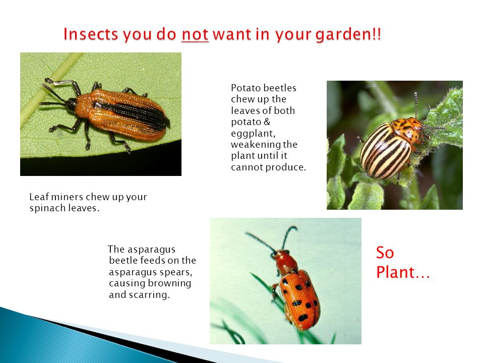Insects you do not want in your garden!!