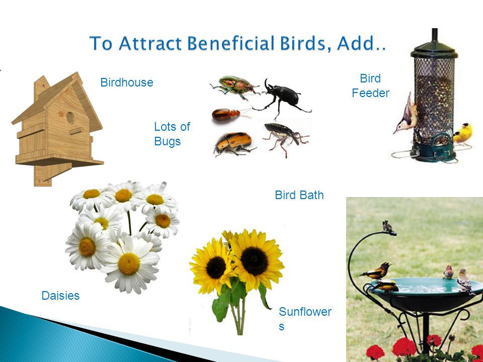 To Attract Beneficial Birds, Add…