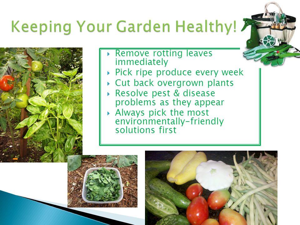 Keeping Your Garden Healthy!