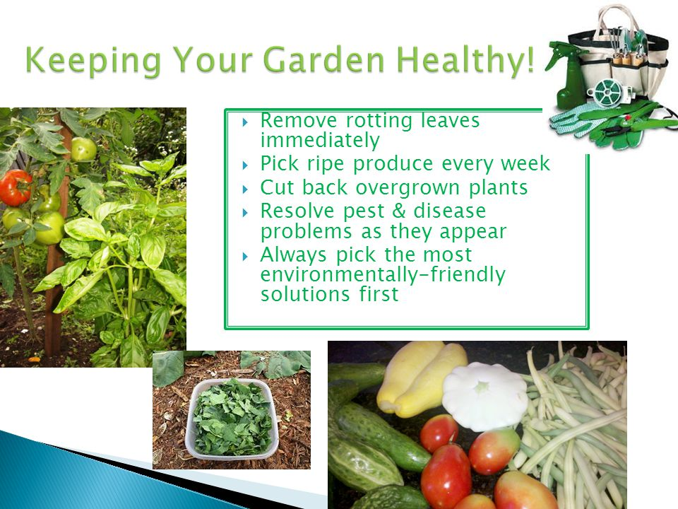 Keeping Your Garden Healthy!