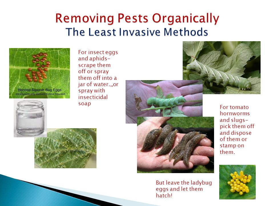 Removing Pests Organically The Least Invasive Methods