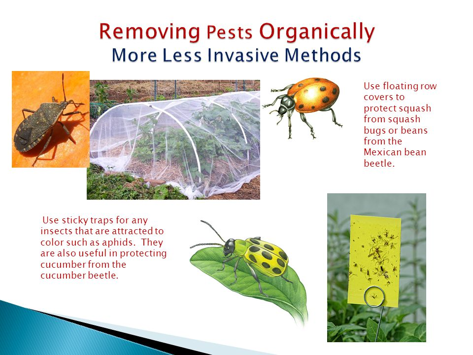 Removing Pests Organically More Less Invasive Methods