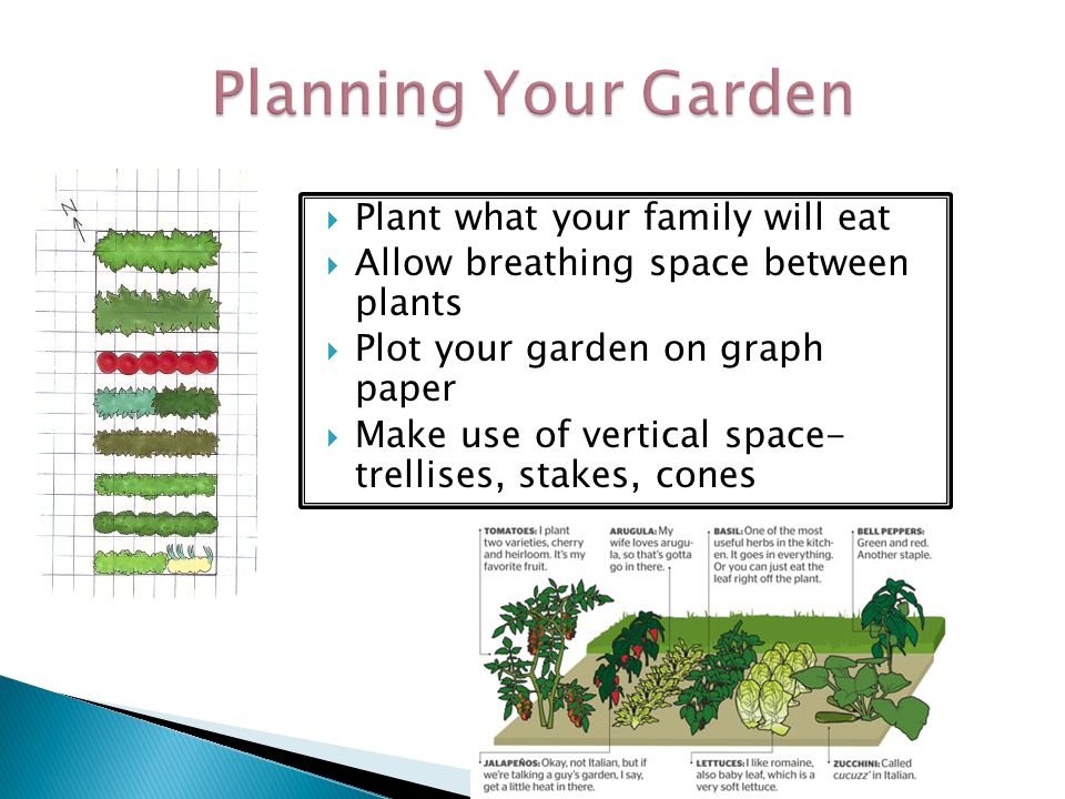 Planning Your Garden Plant what your family will eat