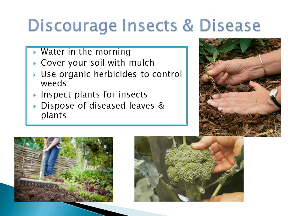 Discourage Insects & Disease