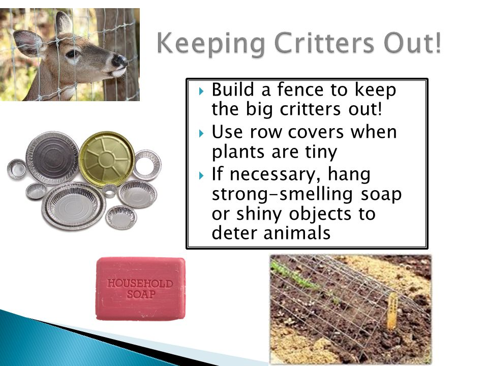 Keeping Critters Out! Build a fence to keep the big critters out!