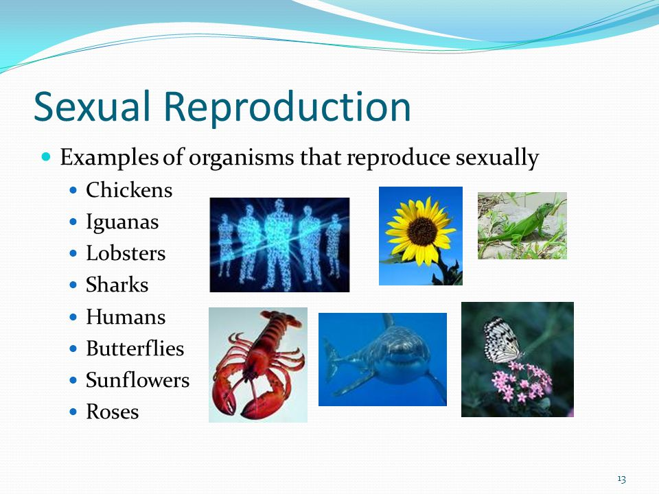 Sexual Reproduction Examples of organisms that reproduce sexually