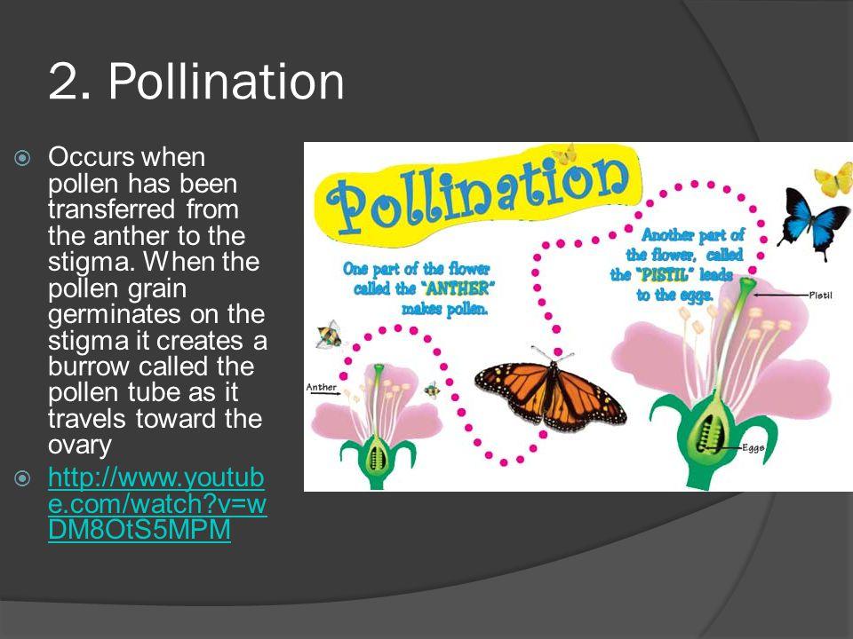 2. Pollination