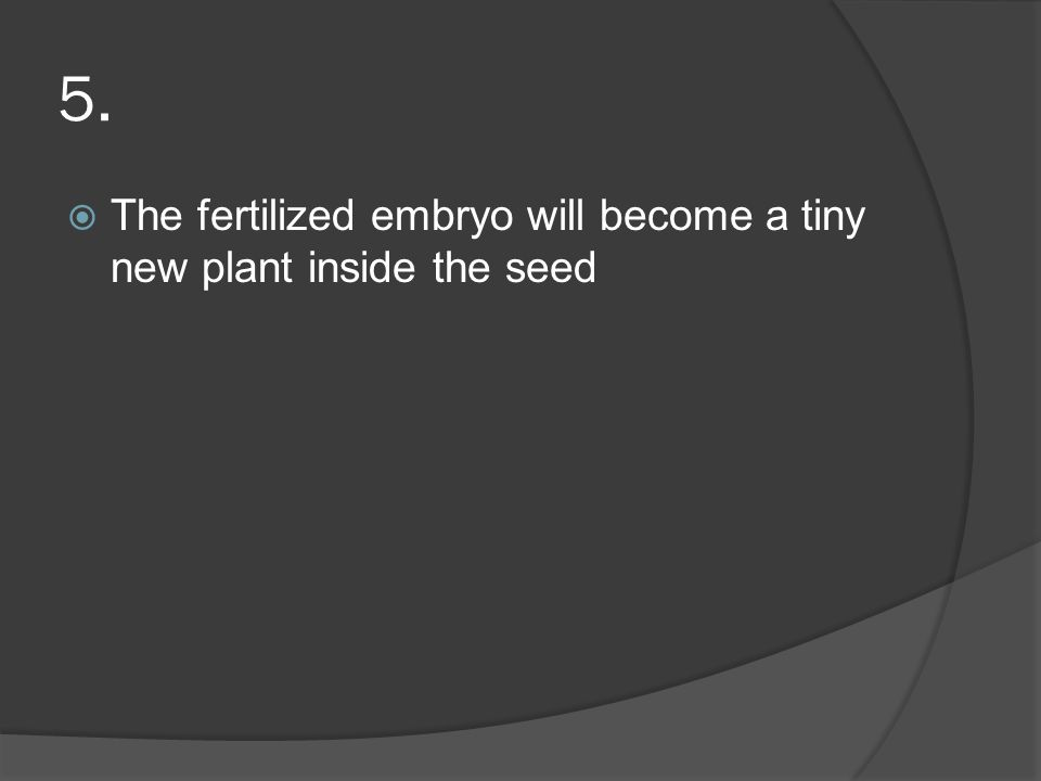 5. The fertilized embryo will become a tiny new plant inside the seed