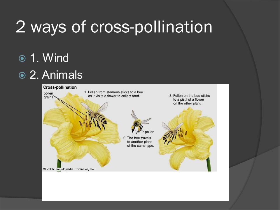 2 ways of cross-pollination