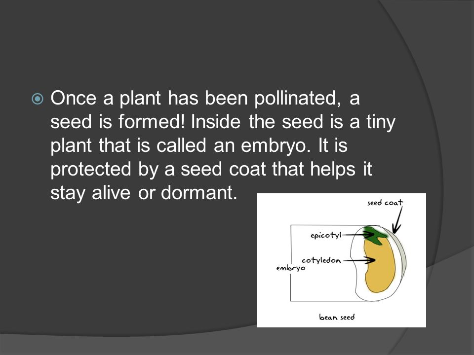 Plant Reproduction And Breeding Ppt Download
