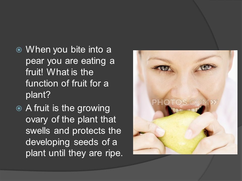 When you bite into a pear you are eating a fruit