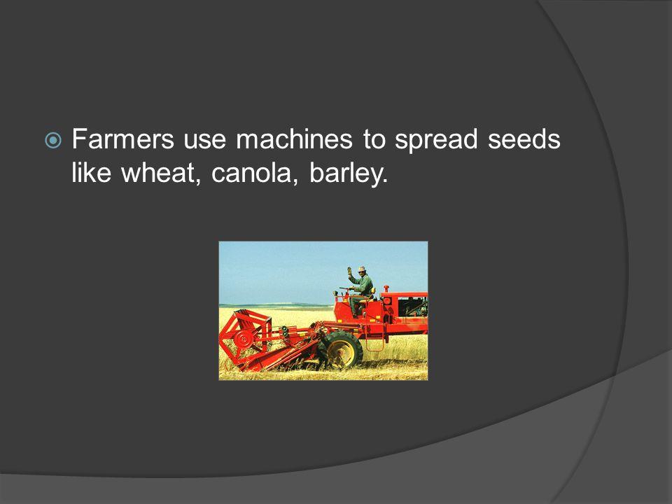 Farmers use machines to spread seeds like wheat, canola, barley.