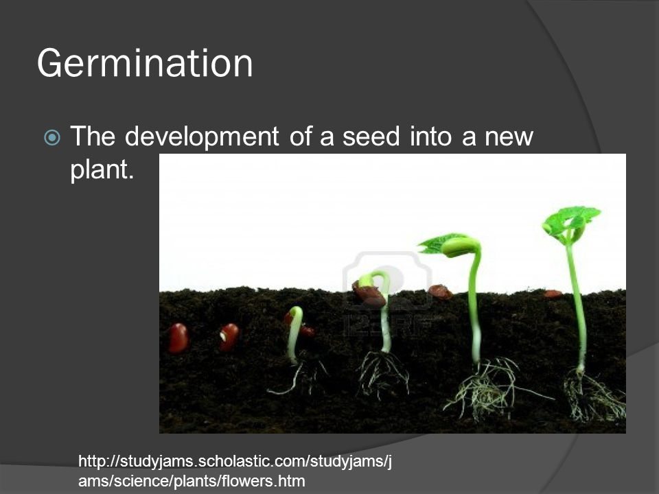 Germination The development of a seed into a new plant.