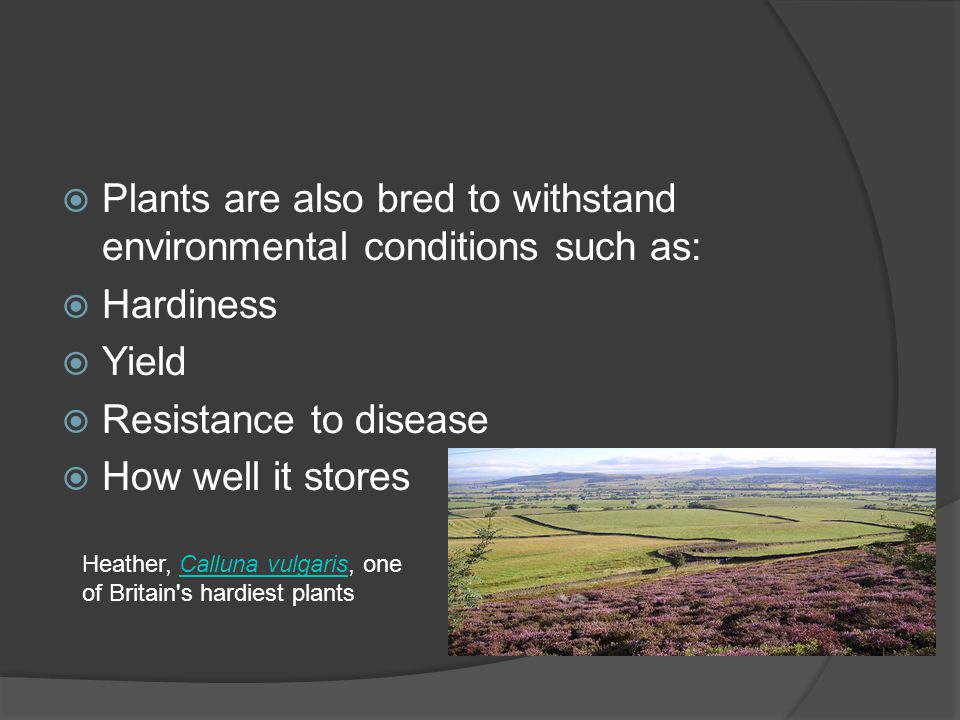 Plants are also bred to withstand environmental conditions such as: