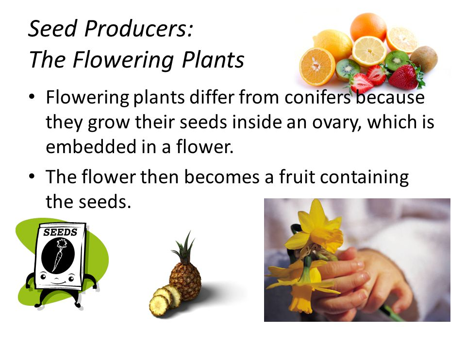 Seed Producers: The Flowering Plants
