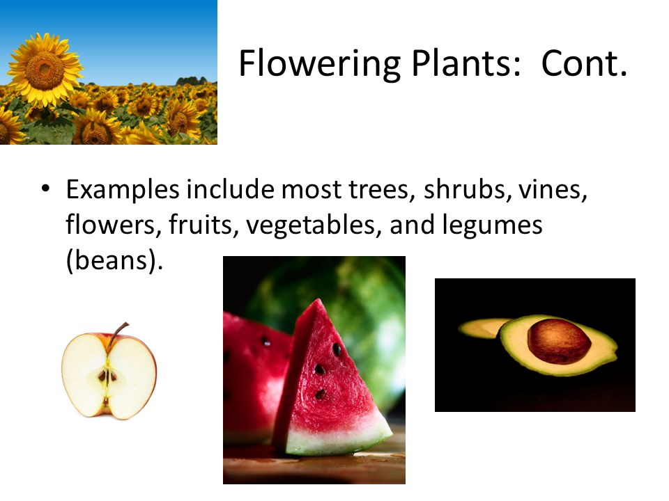 Flowering Plants: Cont.