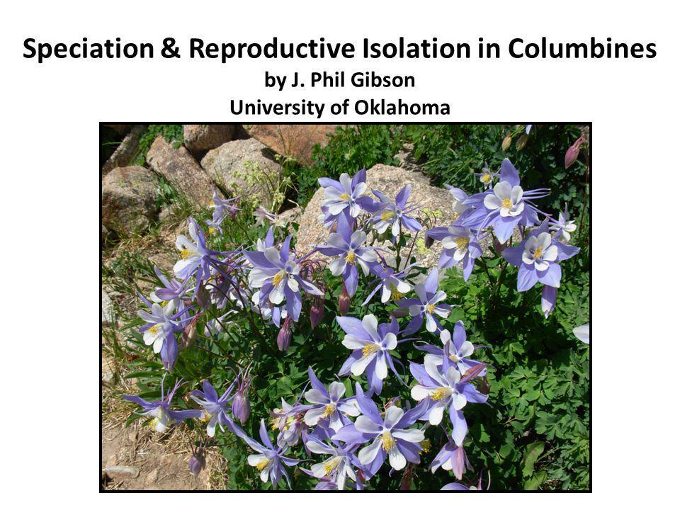 Speciation & Reproductive Isolation in Columbines