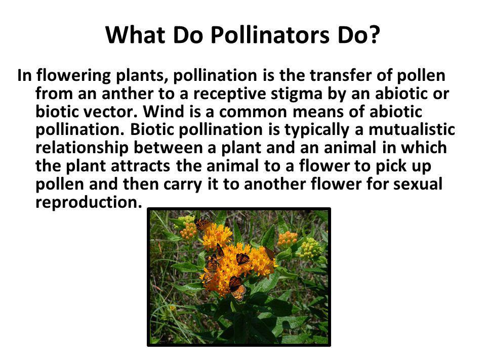 What Do Pollinators Do
