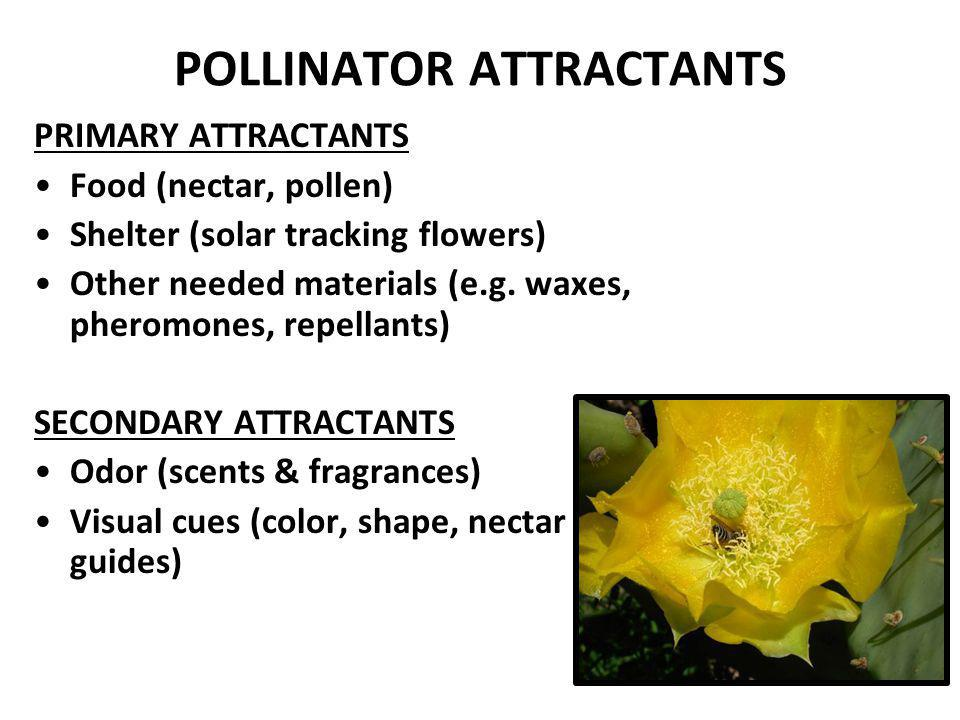 POLLINATOR ATTRACTANTS