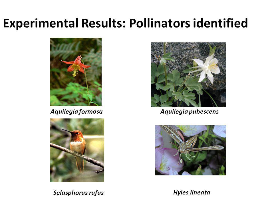 Experimental Results: Pollinators identified