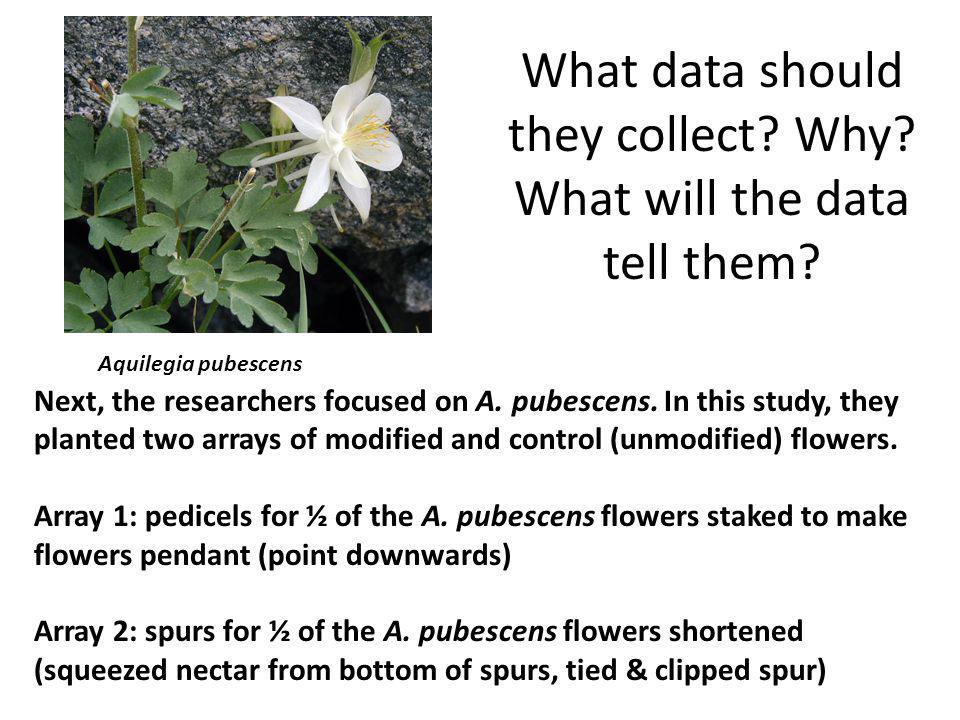 What data should they collect Why What will the data tell them