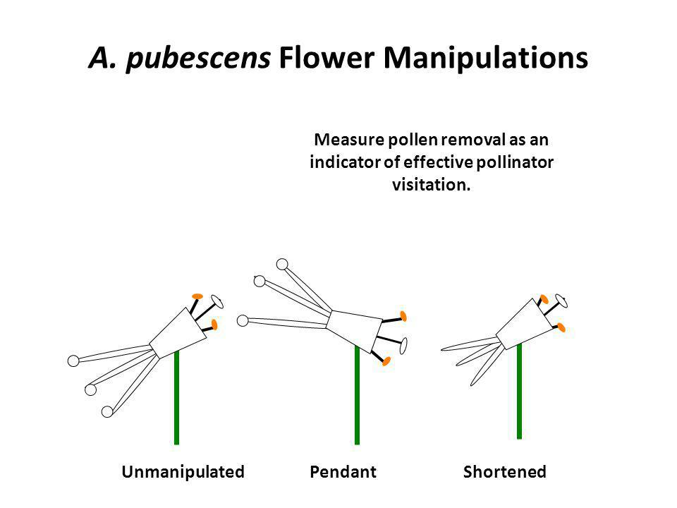 A. pubescens Flower Manipulations