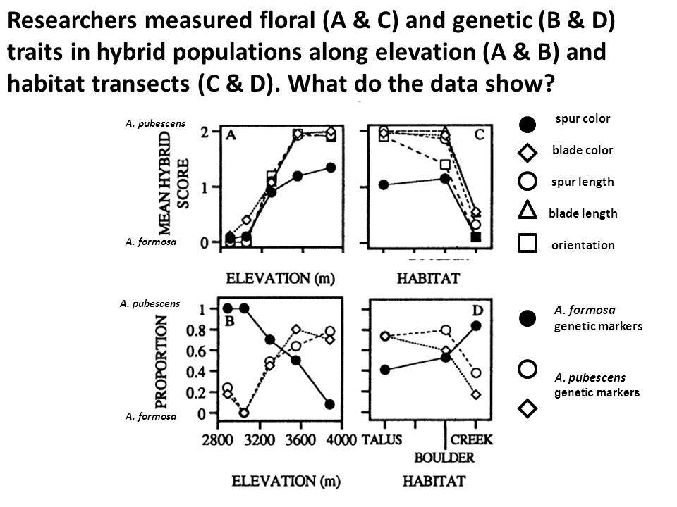 Researchers measured floral (A & C) and genetic (B & D) traits in hybrid populations along elevation (A & B) and habitat transects (C & D). What do the data show
