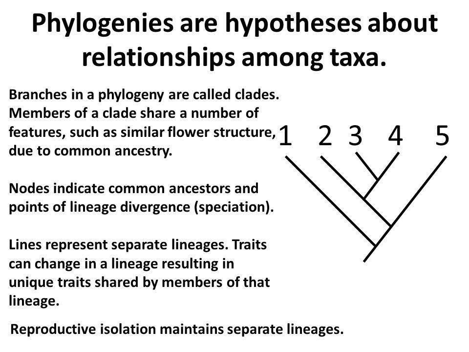 1 2 3 4 5 Phylogenies are hypotheses about relationships among taxa.