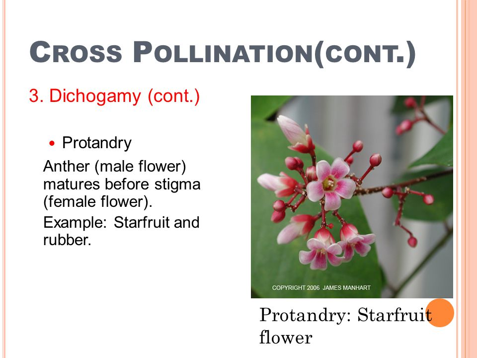 Cross Pollination(cont.)
