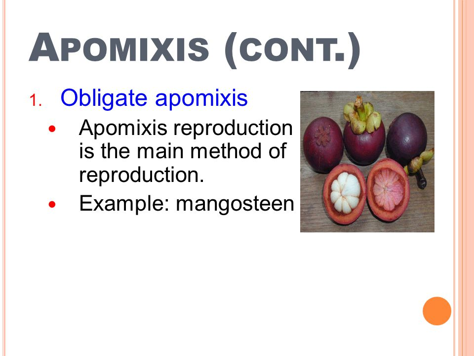 Apomixis (cont.) Obligate apomixis