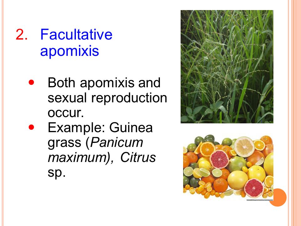 Facultative apomixis Both apomixis and sexual reproduction occur.