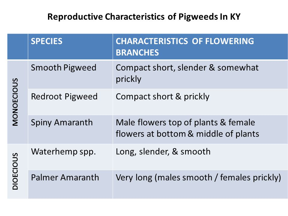 Reproductive Characteristics of Pigweeds In KY