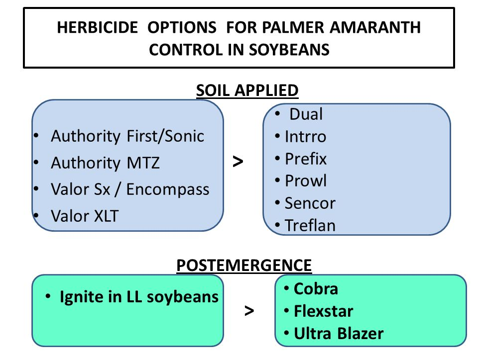 HERBICIDE OPTIONS FOR PALMER AMARANTH CONTROL IN SOYBEANS