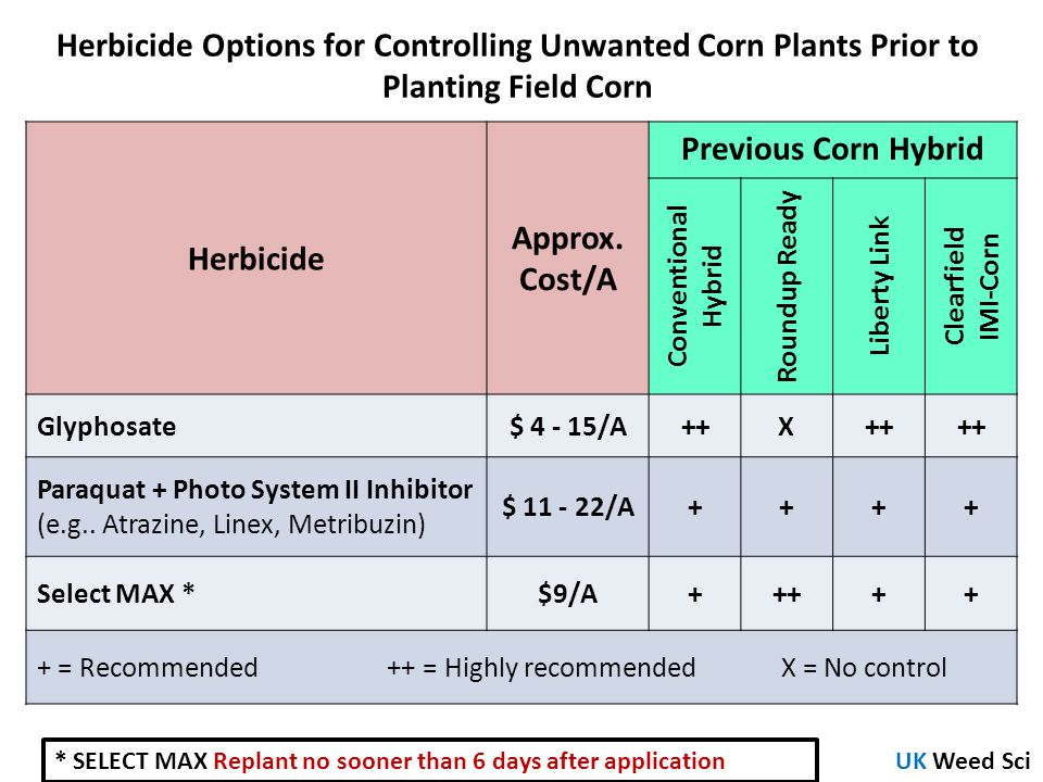 Herbicide Options for Controlling Unwanted Corn Plants Prior to Planting Field Corn