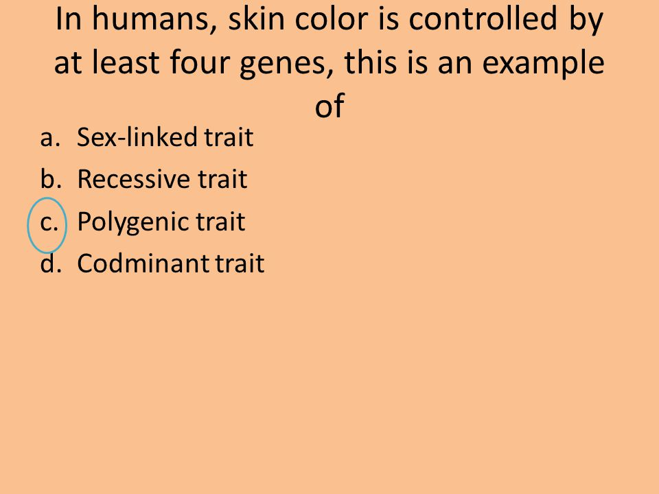 In humans, skin color is controlled by at least four genes, this is an example of