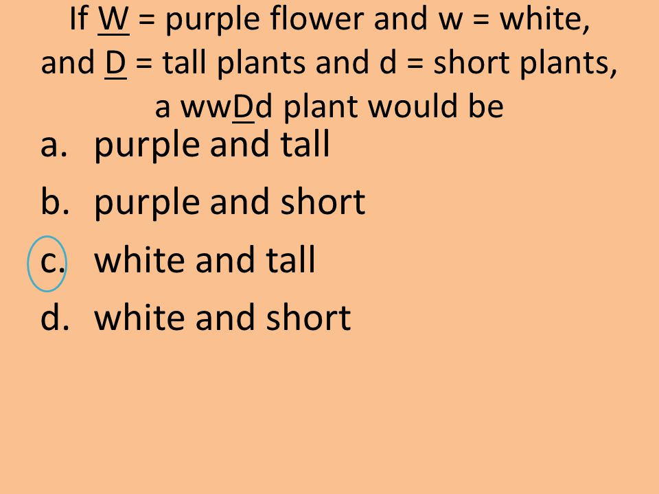 purple and tall purple and short white and tall white and short