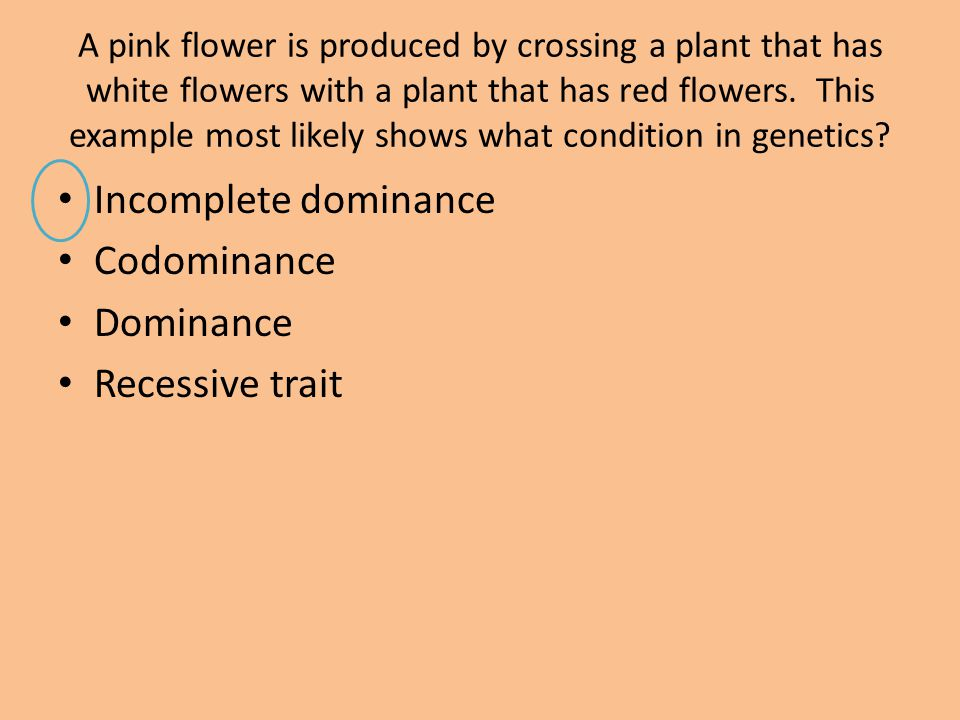Incomplete dominance Codominance Dominance Recessive trait