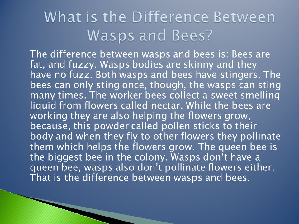 What is the Difference Between Wasps and Bees
