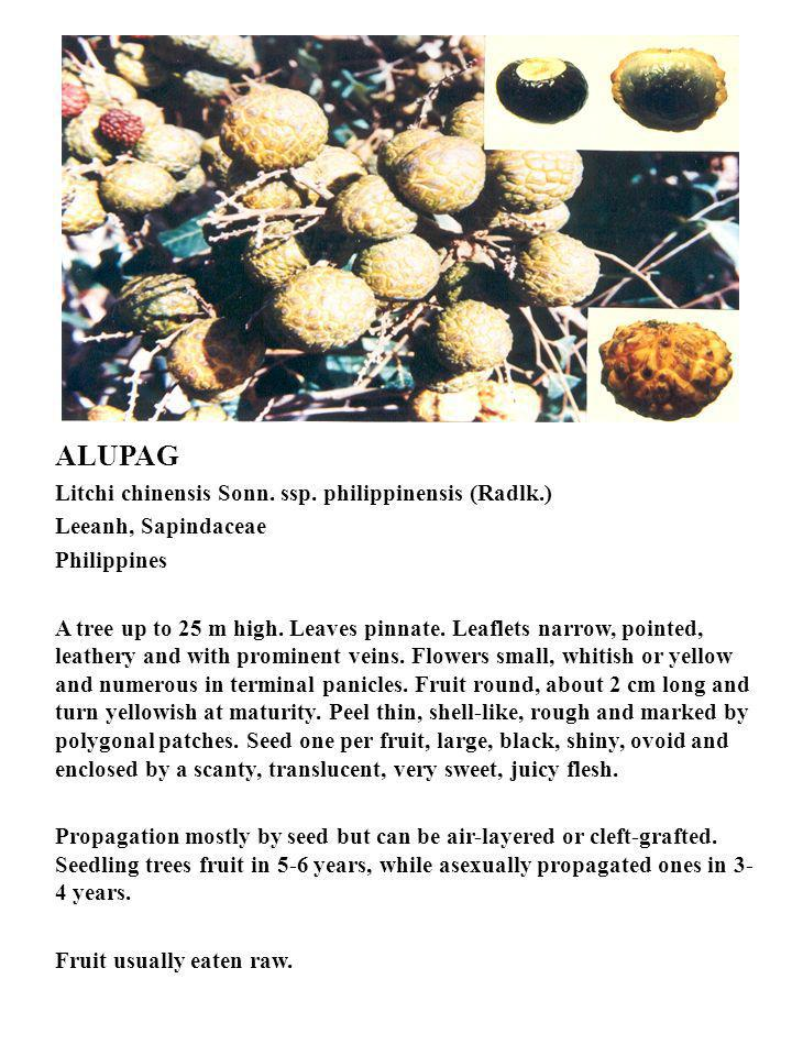 ALUPAG Litchi chinensis Sonn. ssp. philippinensis (Radlk.)