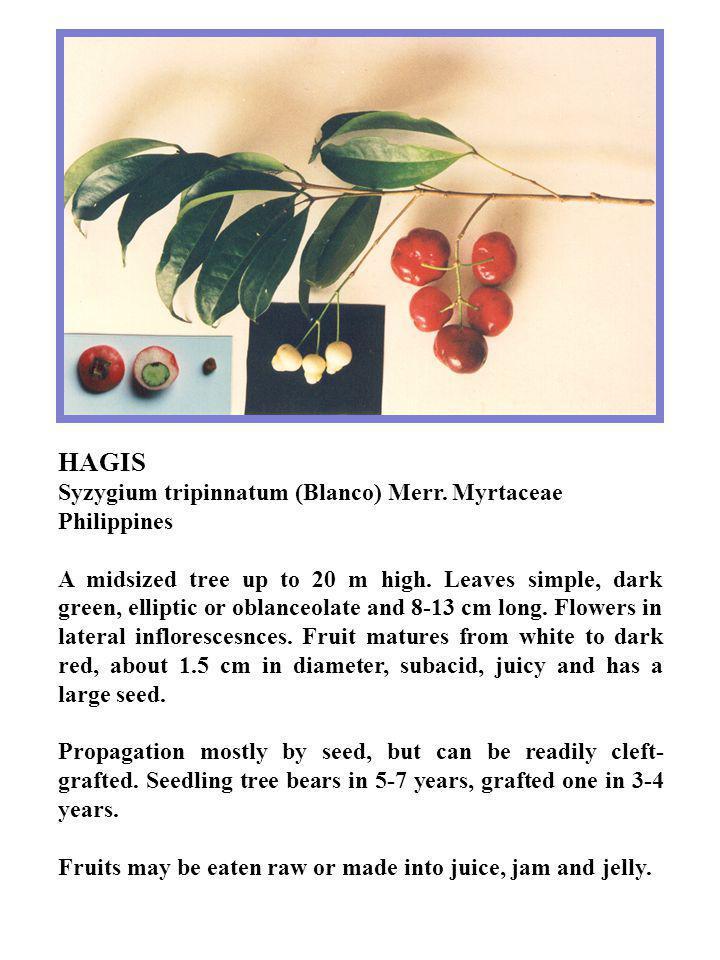 HAGIS Syzygium tripinnatum (Blanco) Merr. Myrtaceae Philippines