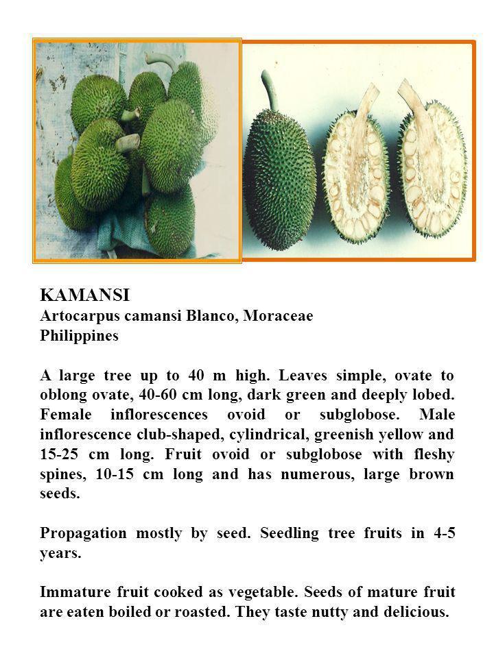 KAMANSI Artocarpus camansi Blanco, Moraceae Philippines