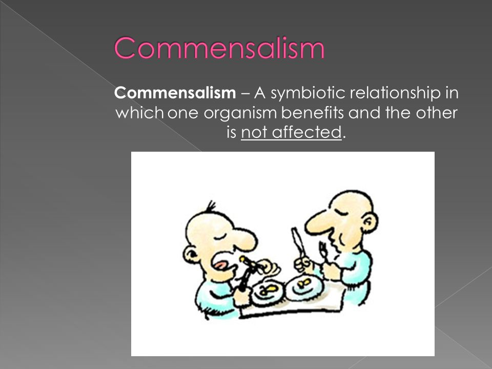 Commensalism Commensalism – A symbiotic relationship in which one organism benefits and the other is not affected.