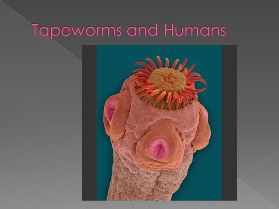 Tapeworms and Humans
