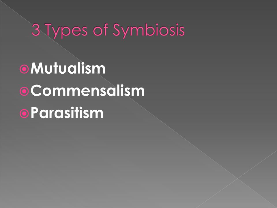 3 Types of Symbiosis Mutualism Commensalism Parasitism