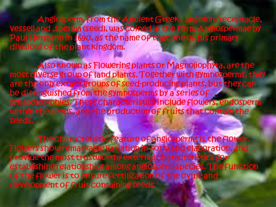 Angiosperm, from the Ancient Greek , angeíon (receptacle, vessel) and ,sperma (seed), was coined in the form Angiospermae by Paul Hermann in 1690, as the name of that one of his primary divisions of the plant kingdom.