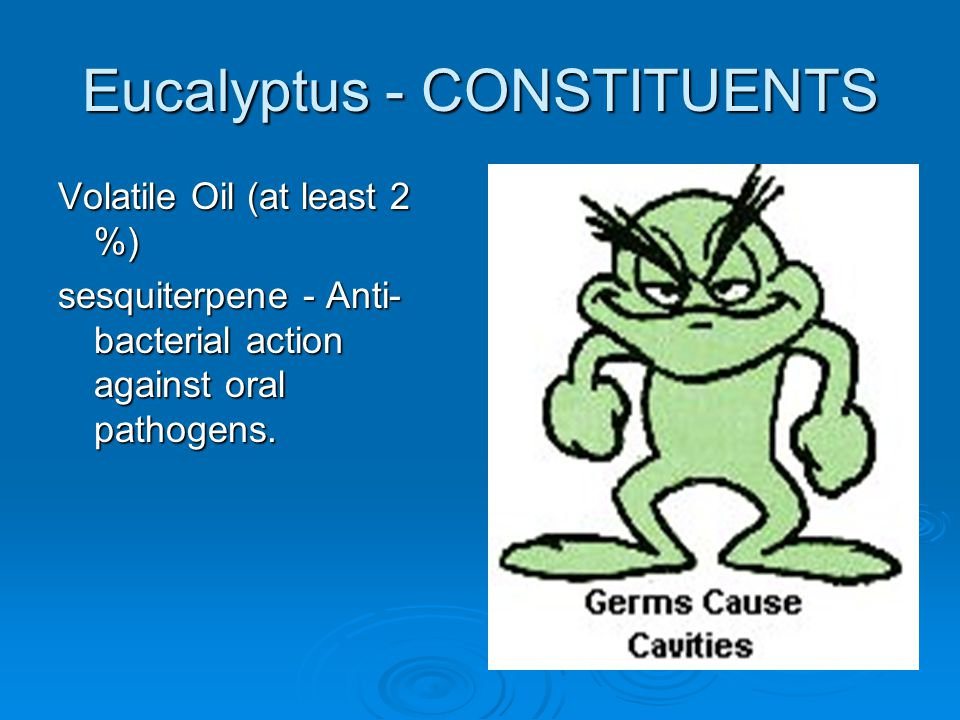Eucalyptus - CONSTITUENTS