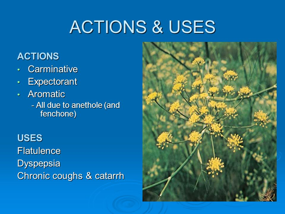 ACTIONS & USES ACTIONS Carminative Expectorant Aromatic USES