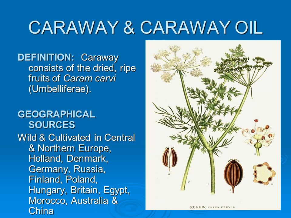 CARAWAY & CARAWAY OIL DEFINITION: Caraway consists of the dried, ripe fruits of Caram carvi (Umbelliferae).