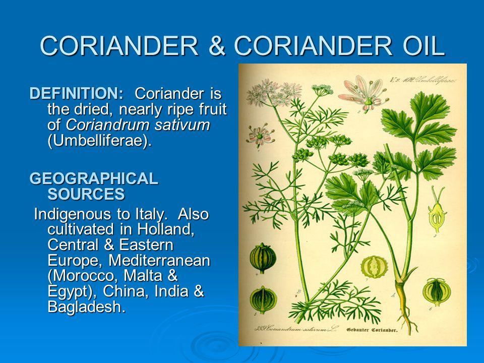 CORIANDER & CORIANDER OIL